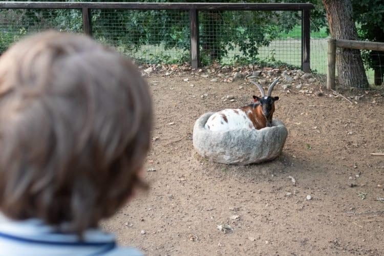 animals in parque biologico de gaia