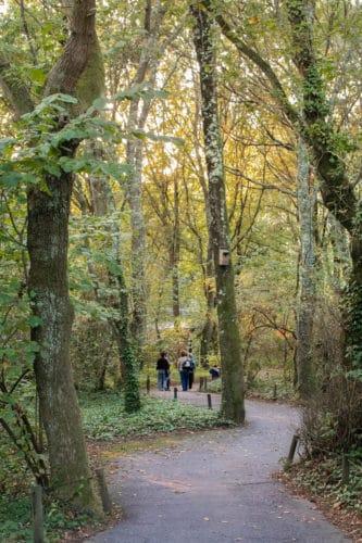 woods of parque biologico de gaia