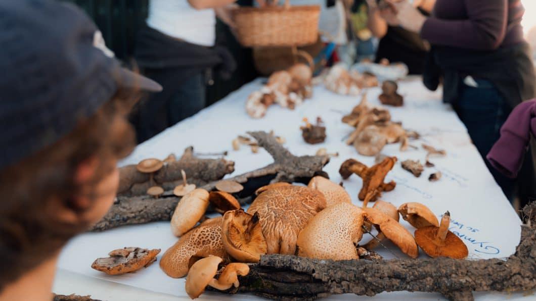 hunting for mushrooms portugal