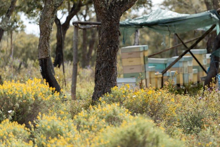 alentejo abelhas