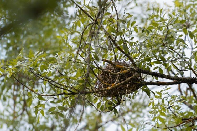 birds nest alentejo